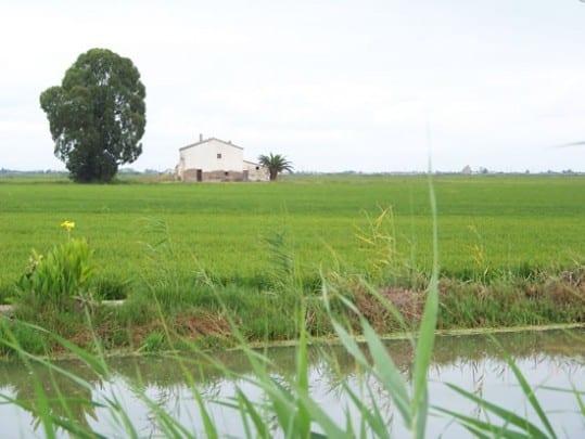 rizières de l'Ebre