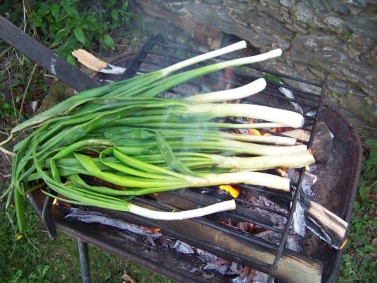 On fait cuire les calçots directement à la flamme du feu de bois
