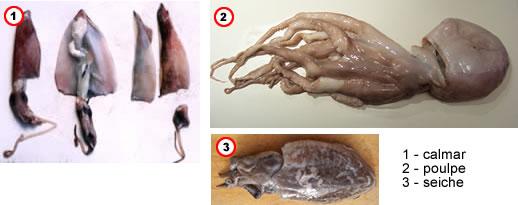 comment pr 233 parer poulpes calmars et seiches