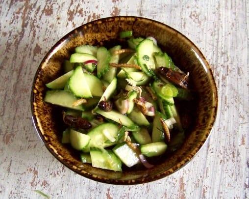 salade de concombres aux grillons et vers de farine